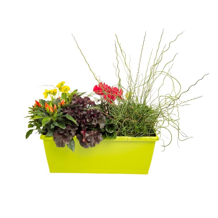 Jardinière d'automne. La jardinière de 40 cm 845338