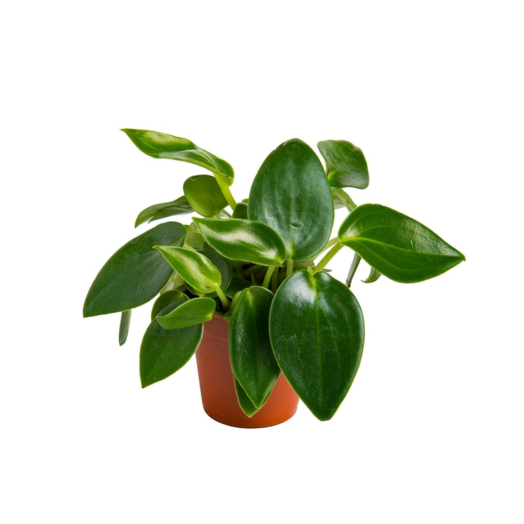 Plantes graphiques vertes. 873293