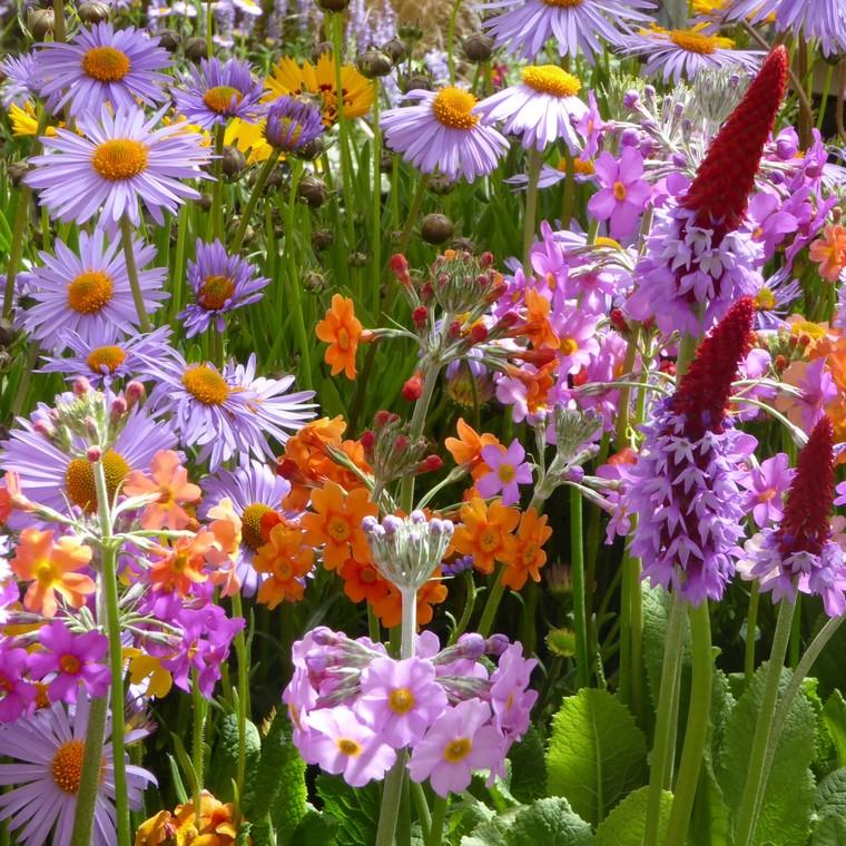 Plantes vivaces variées. Le pot de 3 litres 877426