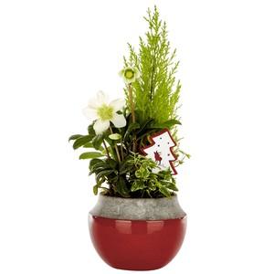 Composition festive pot céramique rouge. La composition 968367
