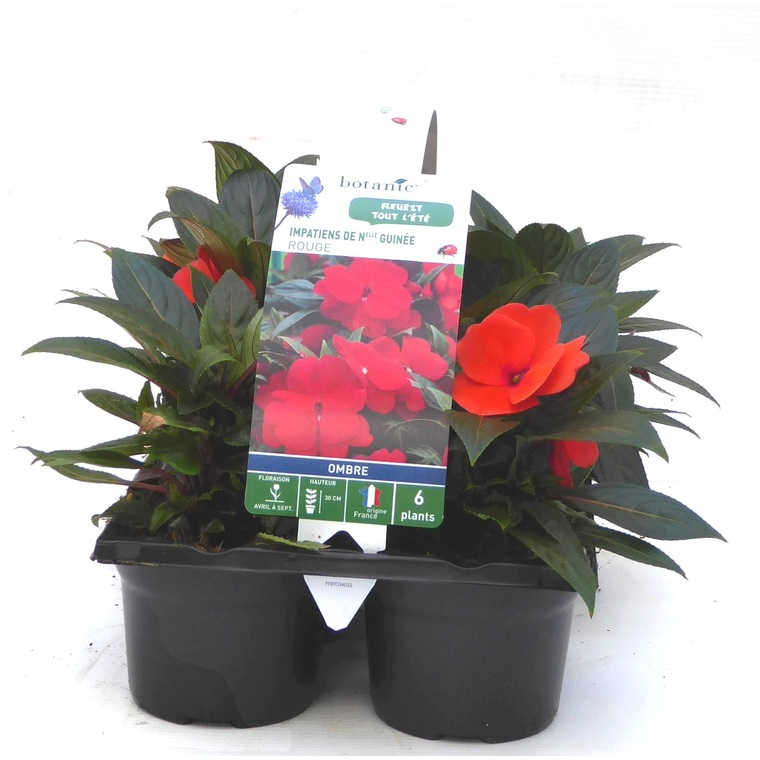 Impatiens de Nouvelle Guinée rouge orange. Le pack de 6 plants 916437