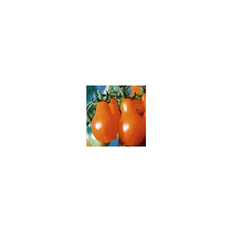 Tomate cerise poire rouge Poire Rouge Red Pear bio. Le pot compostable de 10.5 cm 41513