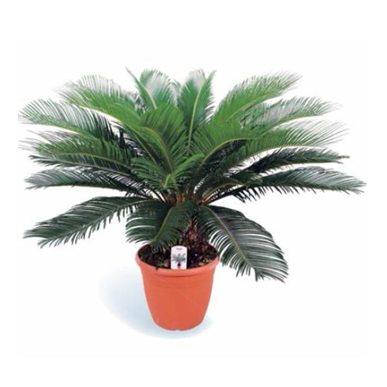 Faux palmier 954059