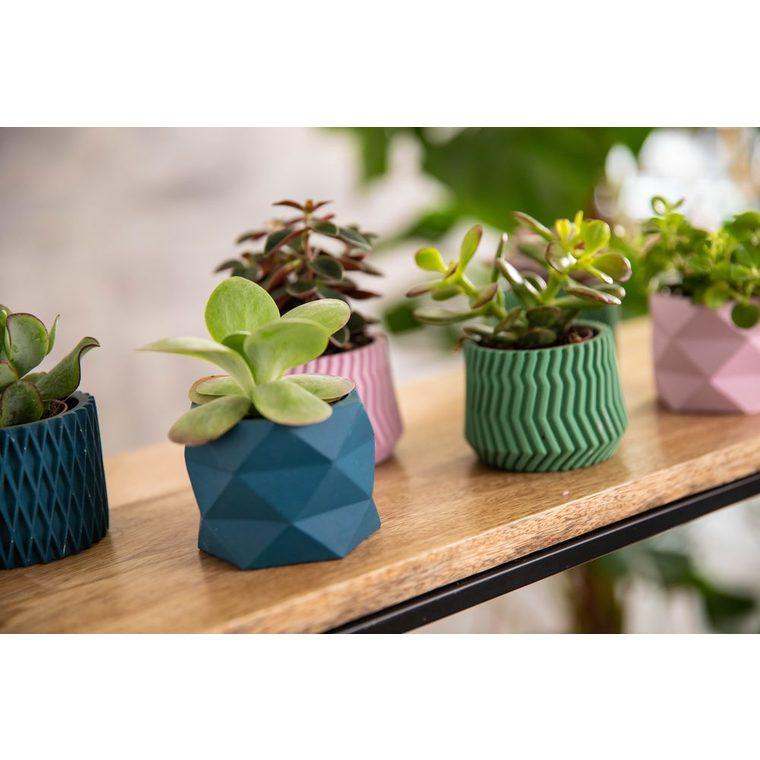 Succulente avec pot céramique modèles variés Ø 6,5 cm x H 10 cm 968218
