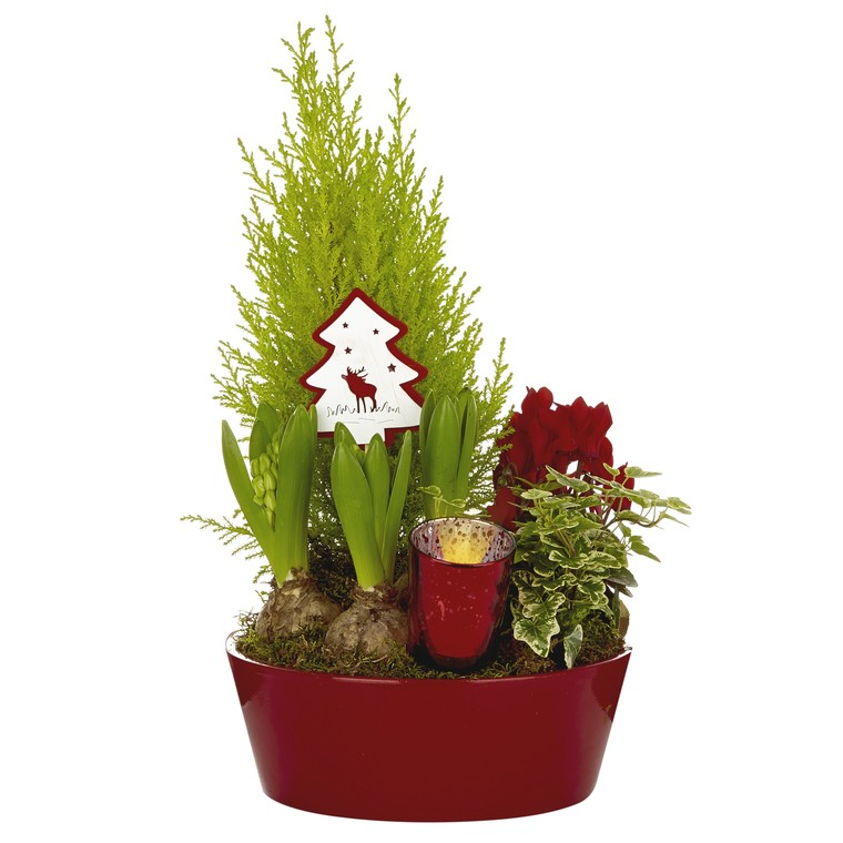 Composition festive en coupe zinc rouge. La composition 968370