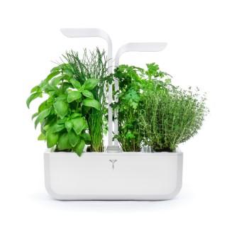 Potager Véritable Classique blanc - Lingots Basilic Grand Vert Bio et Coriandre Bio L000158