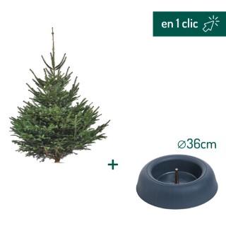 Lot sapin Nordmann coupé 150/175cm + support à réserve d'eau FRESCHER TREE® Ø36cm L000167