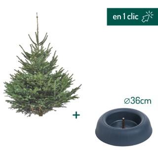 Lot sapin Nordmann coupé 175/200cm + support à réserve d'eau FRESCHER TREE® Ø36cm L000168