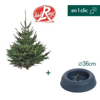Lot sapin Nordmann coupé Label Rouge 175/200cm + support à réserve d'eau FRESCHER TREE® Ø36cm L000170