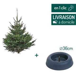 Lot sapin Nordmann coupé 125/150cm + support à réserve d'eau FRESCHER TREE® Ø36cm L000171