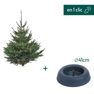 Lot sapin Nordmann coupé 200/250cm + support à réserve d'eau FRESCHER TREE® Ø41cm L000173