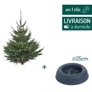 Lot sapin Nordmann coupé 80/100cm + support à réserve d'eau FRESCHER TREE® Ø25cm L000175