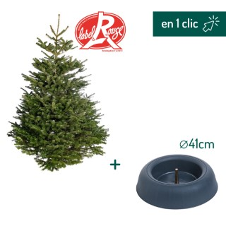 Lot sapin Nordmann coupé Label Rouge 200/250cm + support à réserve d'eau FRESCHER TREE® Ø41cm L000176