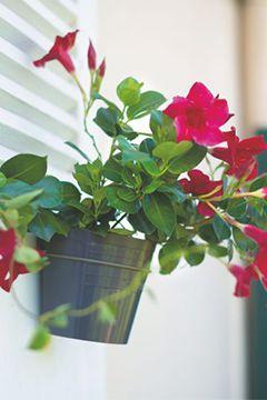 diplad nia la belle tropicale conseil balcon terrasse botanic botanic. Black Bedroom Furniture Sets. Home Design Ideas
