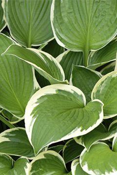 Les plantes vivaces pour massif
