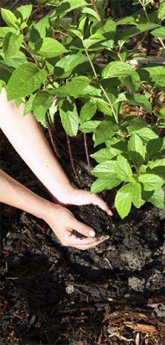 R pandez du fumier pour nourrir votre sol conseil jardin - Le fumier de cheval est il bon pour le jardin ...