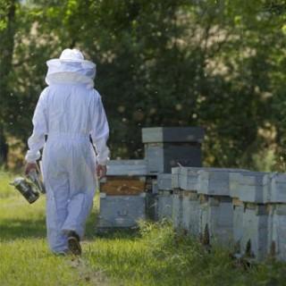 BlocConseil_apidis-les-bergers-des-abeilles