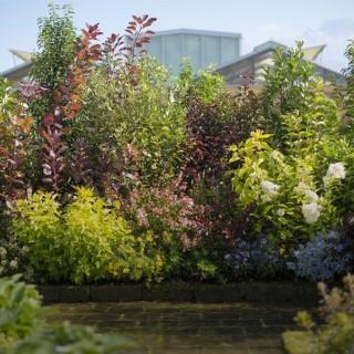 plantes de haie vive plantes et jardin botanic. Black Bedroom Furniture Sets. Home Design Ideas
