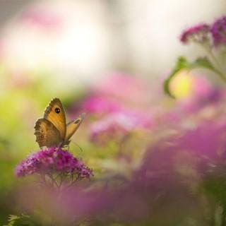 BlocConseil_creez-votre-prairie-fleurie