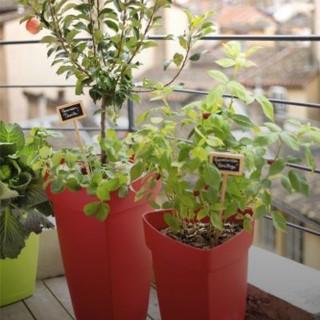 Les arbres fruitiers croquez la vie conseil jardin - Arbres nains pour terrasses ...