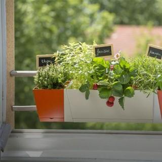BlocConseil_des-plantes-aromatiques-sur-mon-balcon