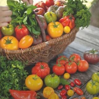 BlocConseil_du-jardin-a-l-assiette-les-tomates-bio