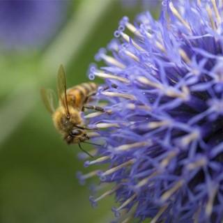 Favoriser la biodiversité pour un jardin plus vivant !