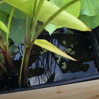 Filtration et oxygénation du bassin