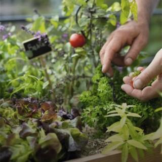 BlocConseil_jardinier-des-villes