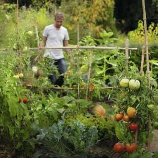BlocConseil_la-prevention-des-maladies-au-jardin