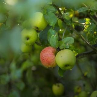 BlocConseil_les-arbres-fruitiers-croquez-la-vie