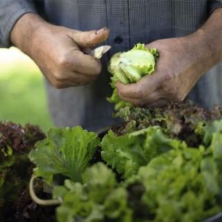 BlocConseil_les-belles-salades-du-potager