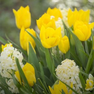 BlocConseil_les-bulbes-de-printemps