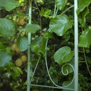 BlocConseil_les-kiwis-faites-le-plein-de-vitamines