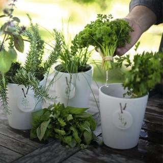 BlocConseil_les-plantes-aromatiques-l-eveil-des-sens