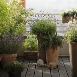 BlocConseil_les-plantes-du-soleil