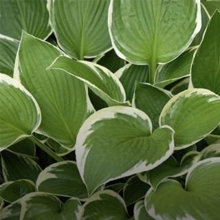 BlocConseil_les-plantes-vivaces-pour-massif