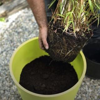 BlocConseil_planter-un-arbre-en-bac-suivez-le-guide