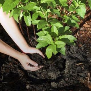 BlocConseil_repandez-du-fumier-pour-nourrir-votre-terre