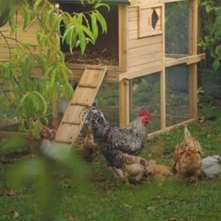 BlocConseil_un-poulailler-dans-mon-jardin