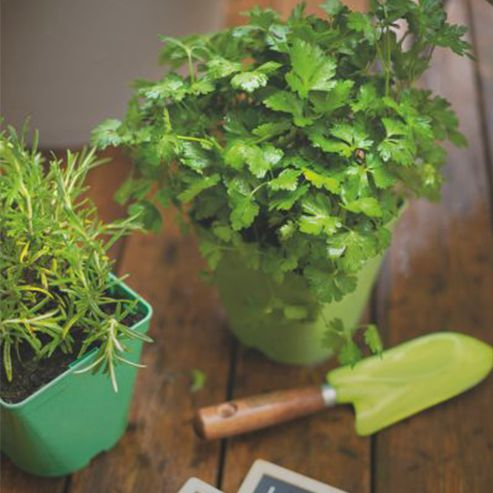 Conseils jardin astuces et conseils jardin botanic botanic - Que semer en octobre ...