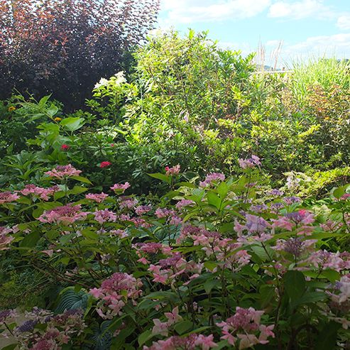 Conseils jardin astuces et conseils jardin botanic botanic - Massif fleuri toute l annee ...