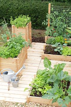 Cr er un potager original conseil potager botanic botanic - Construire un coffre de jardin ...