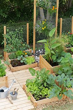 le potager en carr s conseil potager botanic botanic. Black Bedroom Furniture Sets. Home Design Ideas