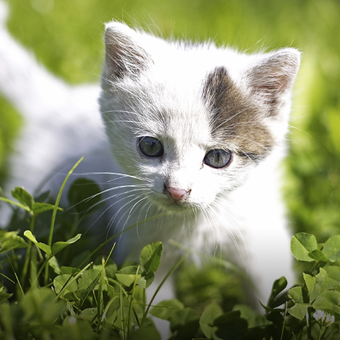 BlocConseil_accueillir-un-chaton-chez-soi