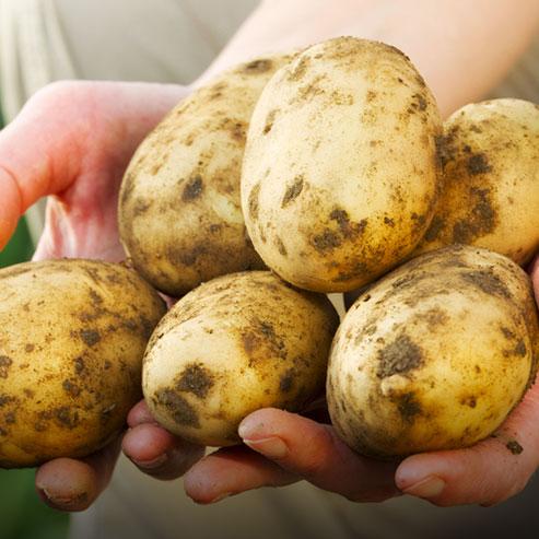 BlocConseil_butter-les-pommes-de-terre