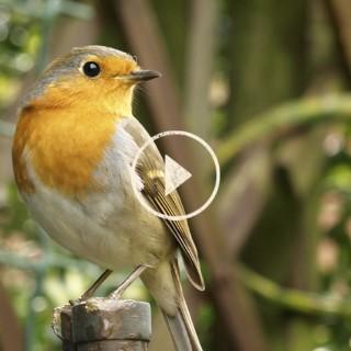 BlocConseil_capsule_les-oiseaux-du-jardin