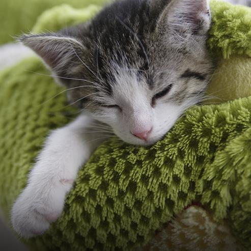 chiot-ou-chaton-une-nouvelle-boule-de-poils-a-la-maison_BlocConseil