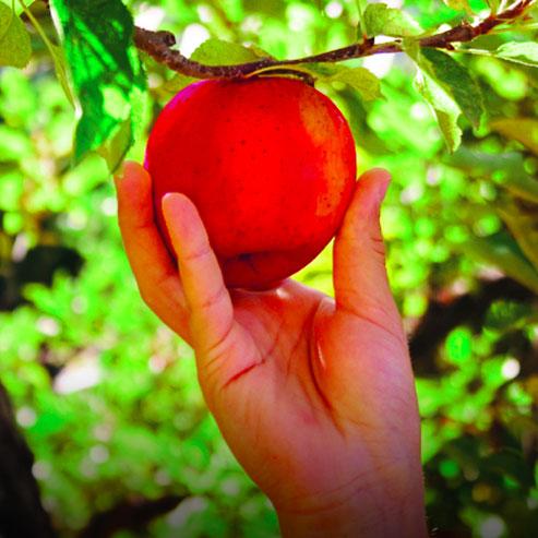 BlocConseil_comment-planter-votre-arbre-fruitier