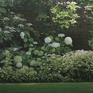BlocConseil_creer-un-massif-dans-son-jardin